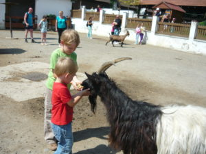 Зоопарк Вышков